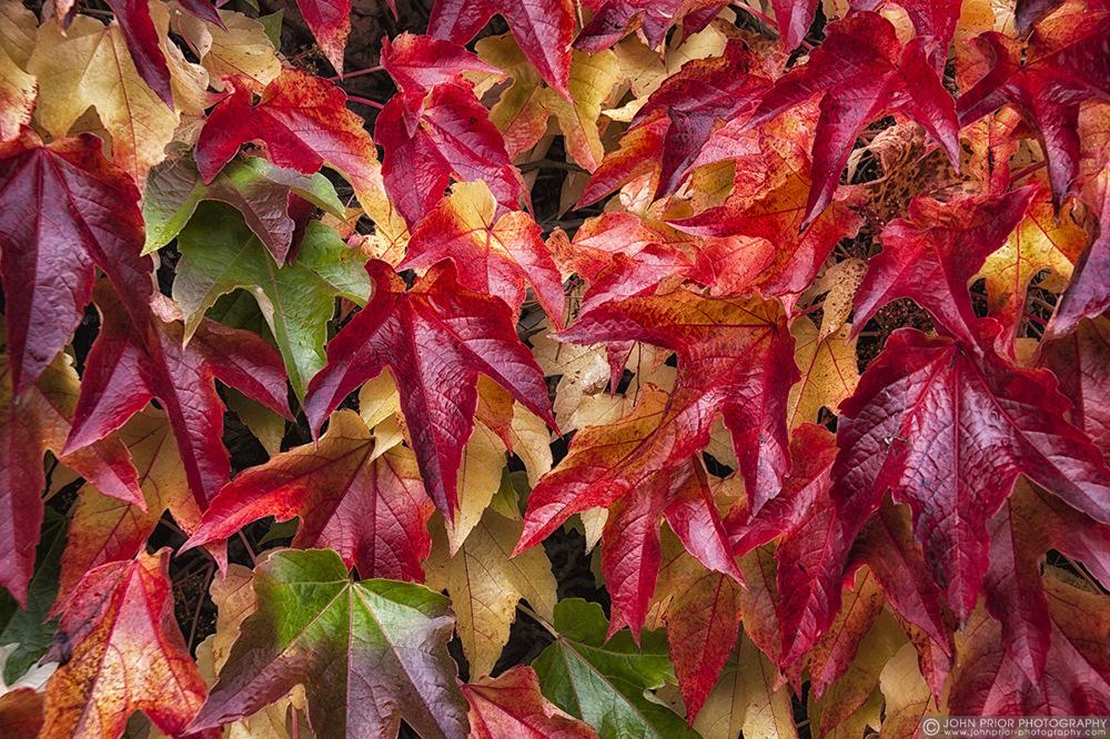 photoblog image Autumn palette I