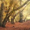 Autumn palette III
