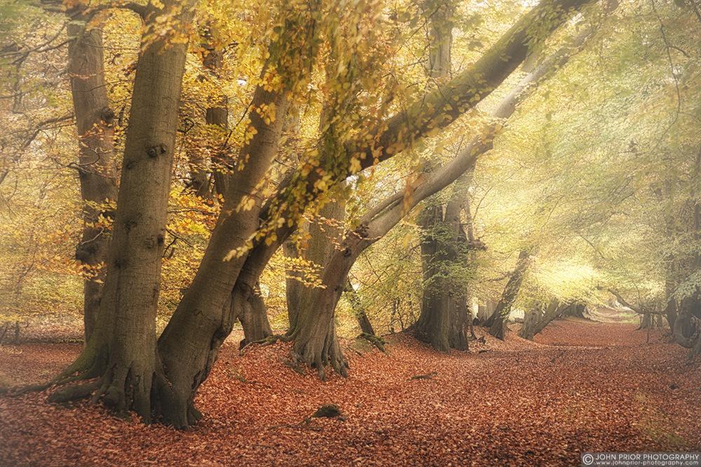 photoblog image Autumn palette III