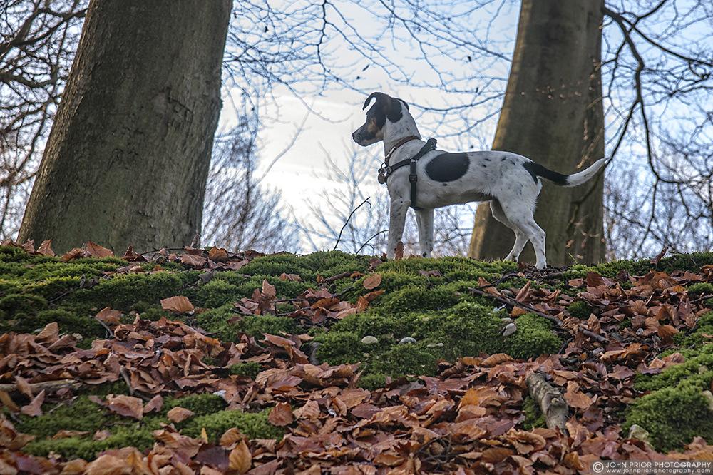 photoblog image Puppy tale