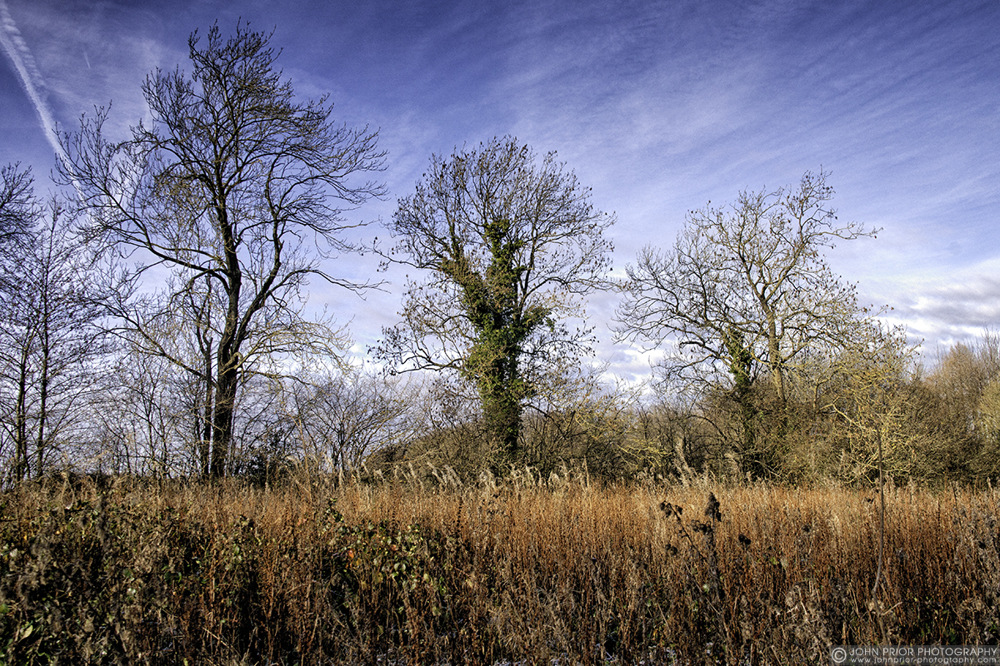 photoblog image In the thicket of it all.