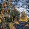 Chorleywood Common II