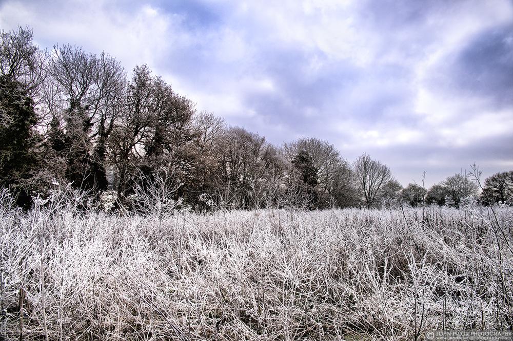 photoblog image Frost