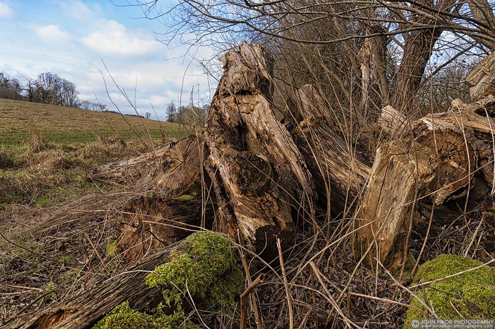 photoblog image Life in the woodpile
