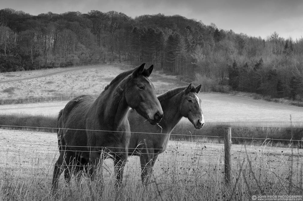 photoblog image Two horses