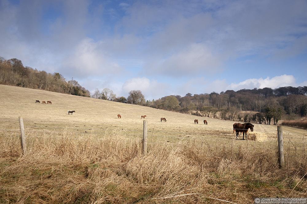 photoblog image Landscape with horses