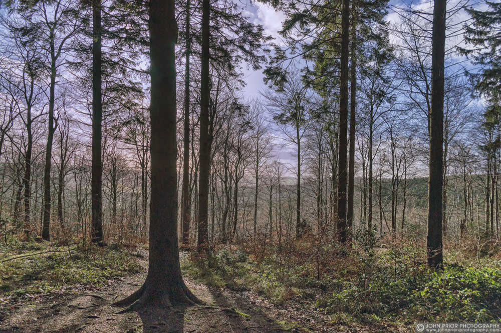 photoblog image Wendover Woods