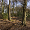 Angling Spring Wood