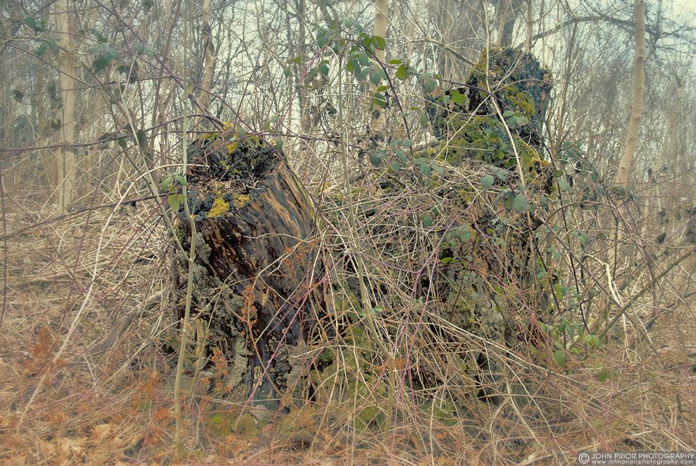 photoblog image Stumped