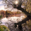 Willow mirror