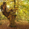 Of long forgotten autumns