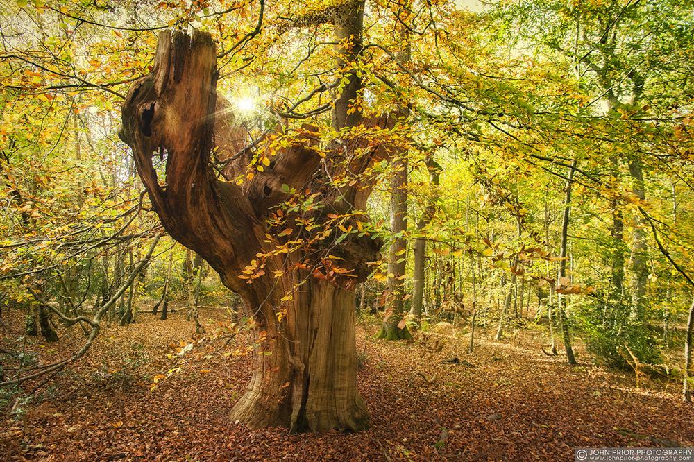 photoblog image Of long forgotten autumns