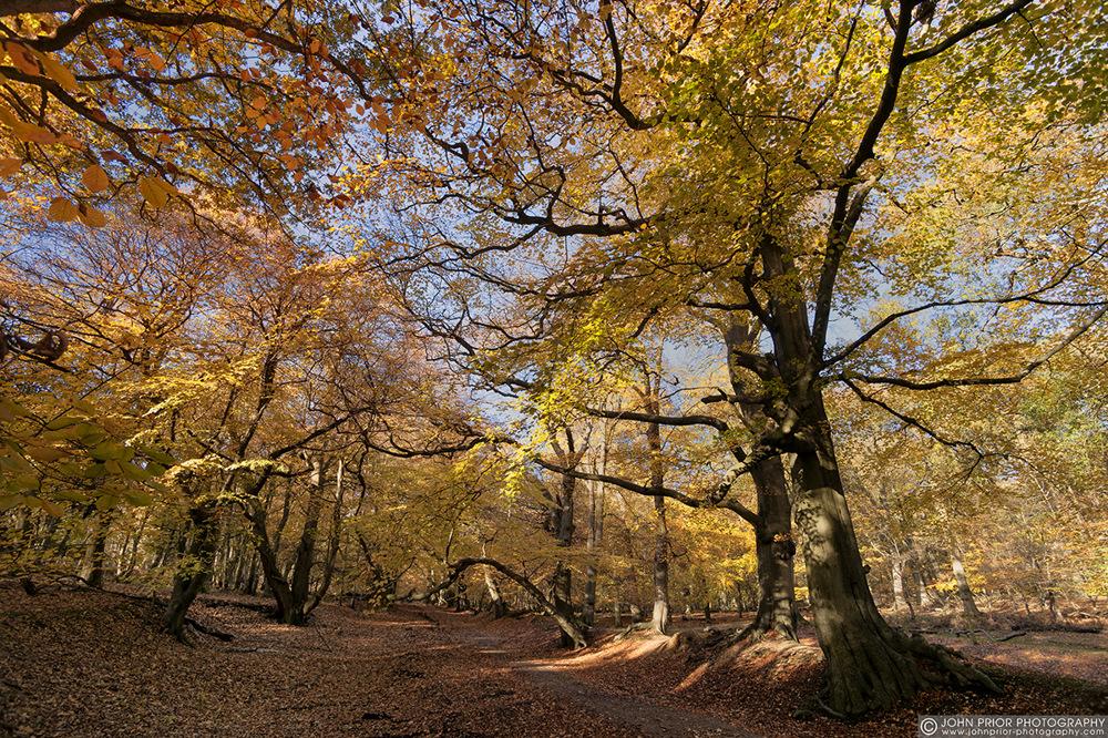 photoblog image Much photographed path at Ashridge.
