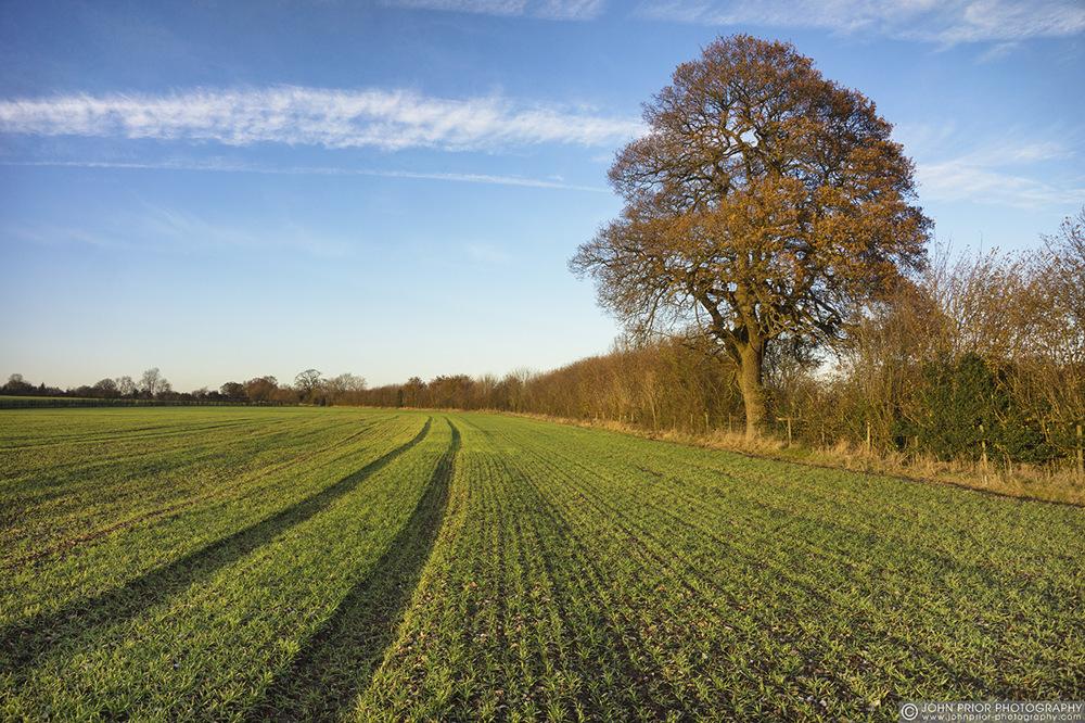 photoblog image Winter wheat