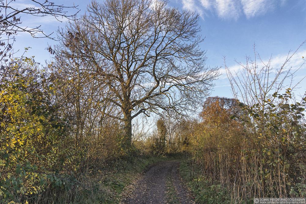 photoblog image Autumn track