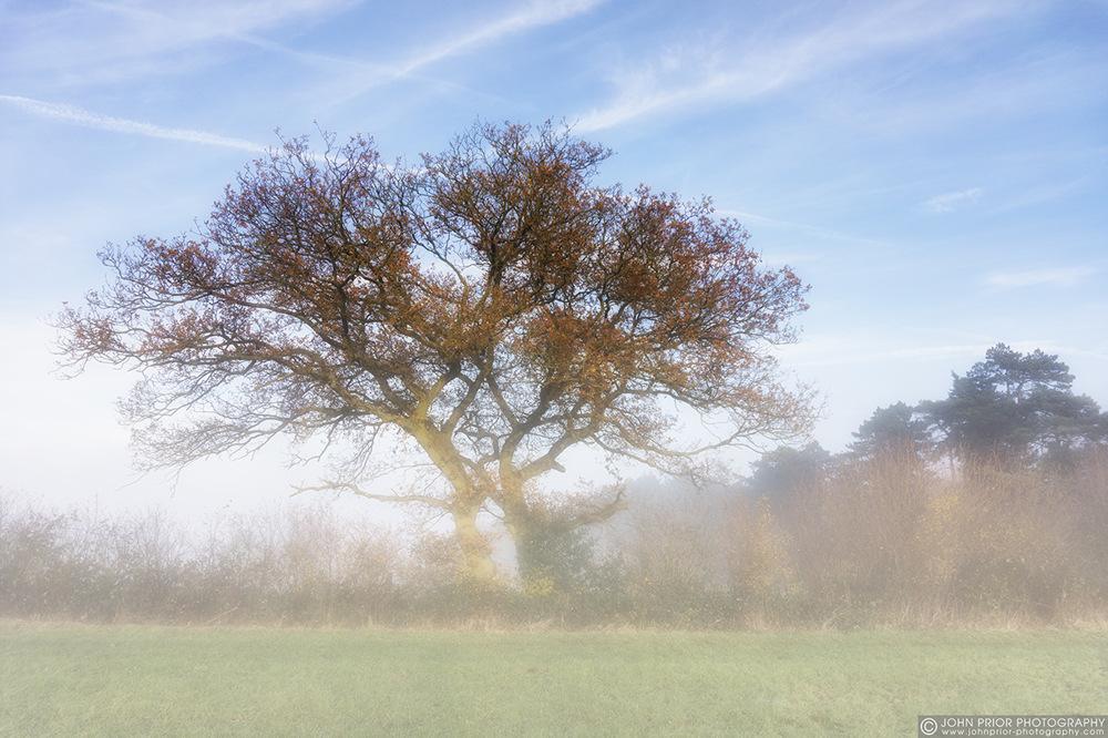 photoblog image Sun and mist