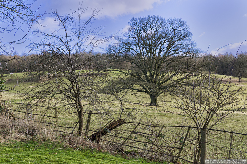 photoblog image The old fence