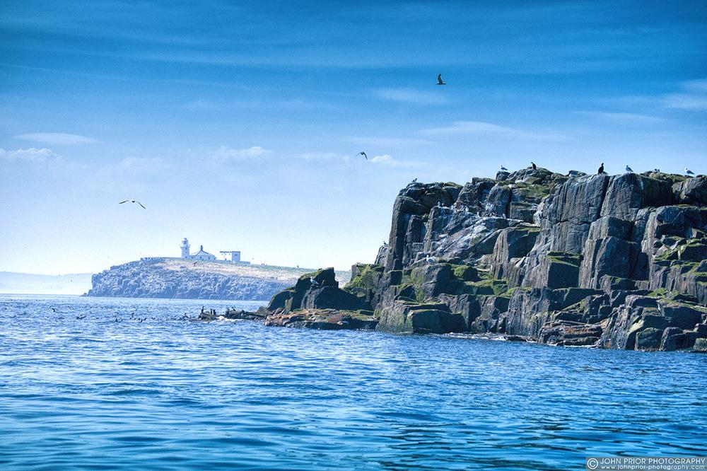 photoblog image Farne Islands