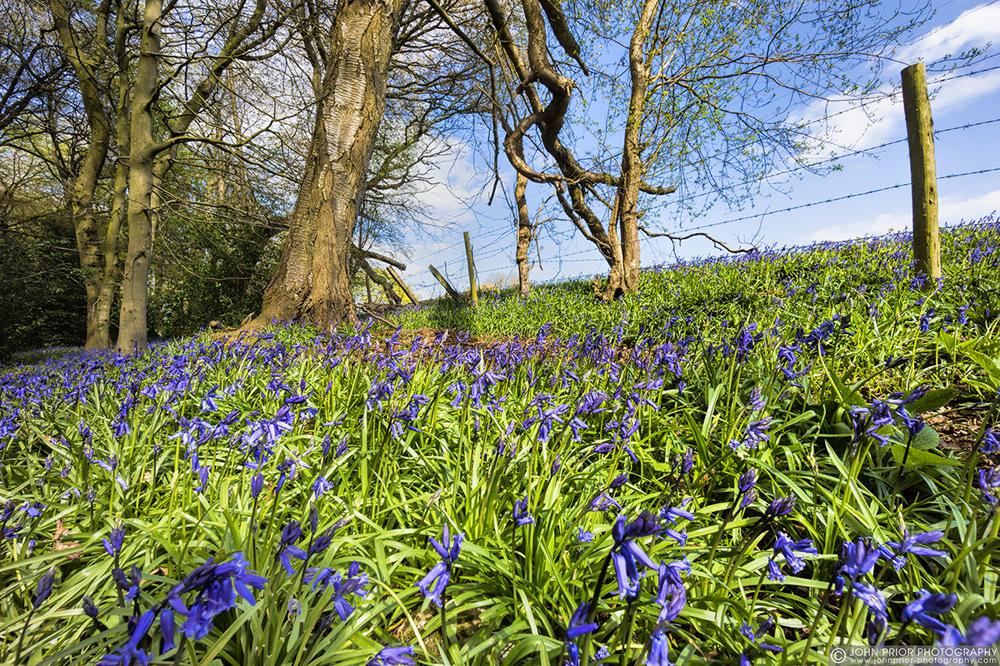 photoblog image Sunday Bluebells