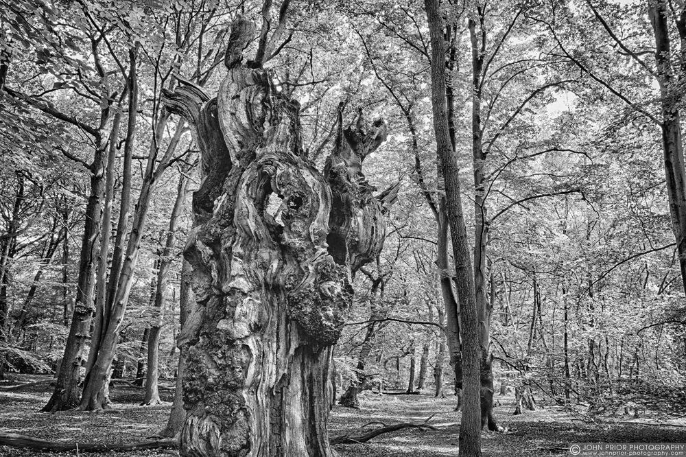 photoblog image Meet the ancestors