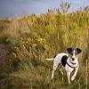 Marsh dog