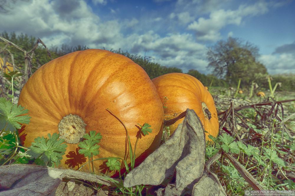 photoblog image Halloween