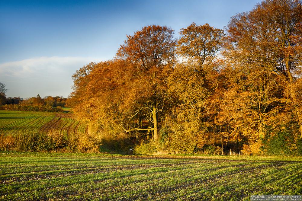 photoblog image Chiltern autumn