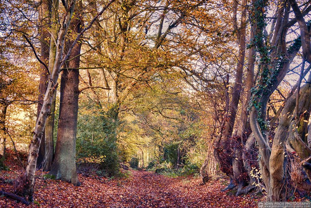 photoblog image Woodland path