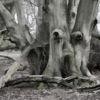 Spooky wood