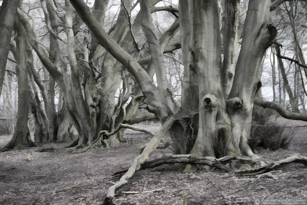 photoblog image Spooky wood