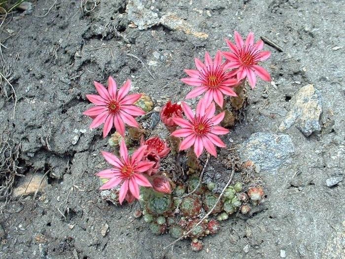 photoblog image Les fleurs du Valais en images