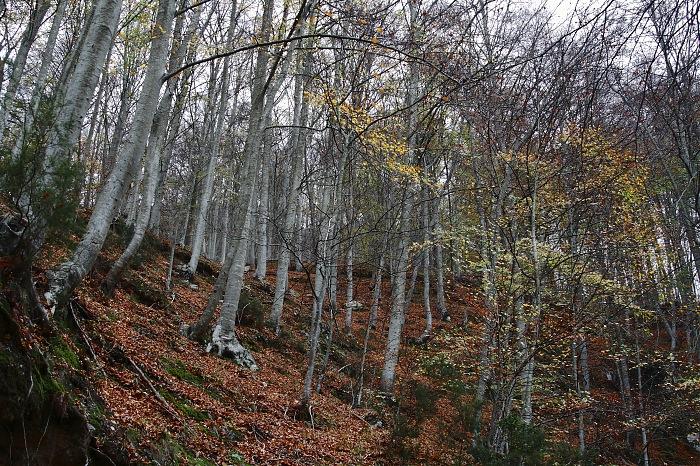 photoblog image Bosque del Montseny