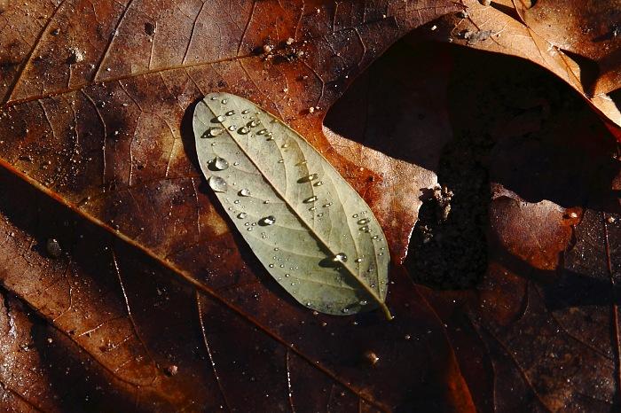 photoblog image Hojas en el Montseny.
