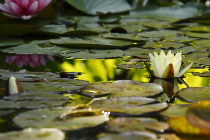 photoblog image Flores de Agua.