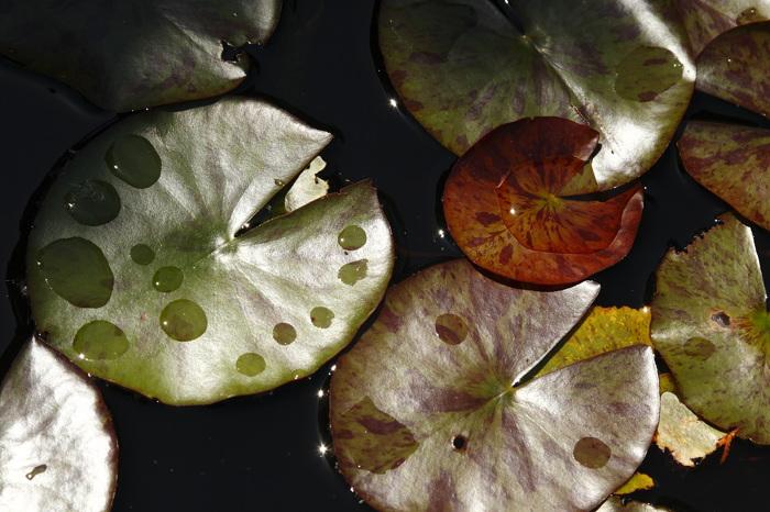 photoblog image Hojas de Agua...