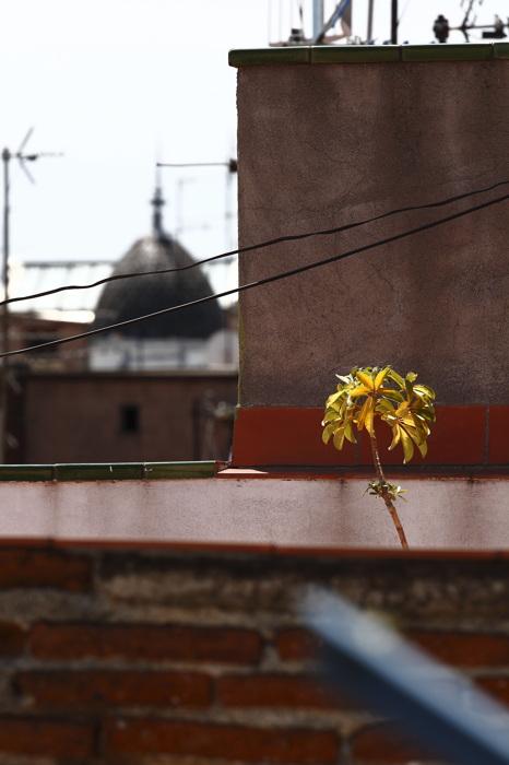 photoblog image Desenfoque