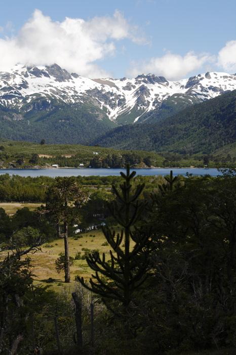 photoblog image Moquehe - Patagonia