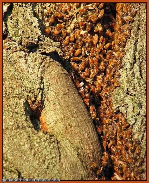 photoblog image Bees in her Bonnet