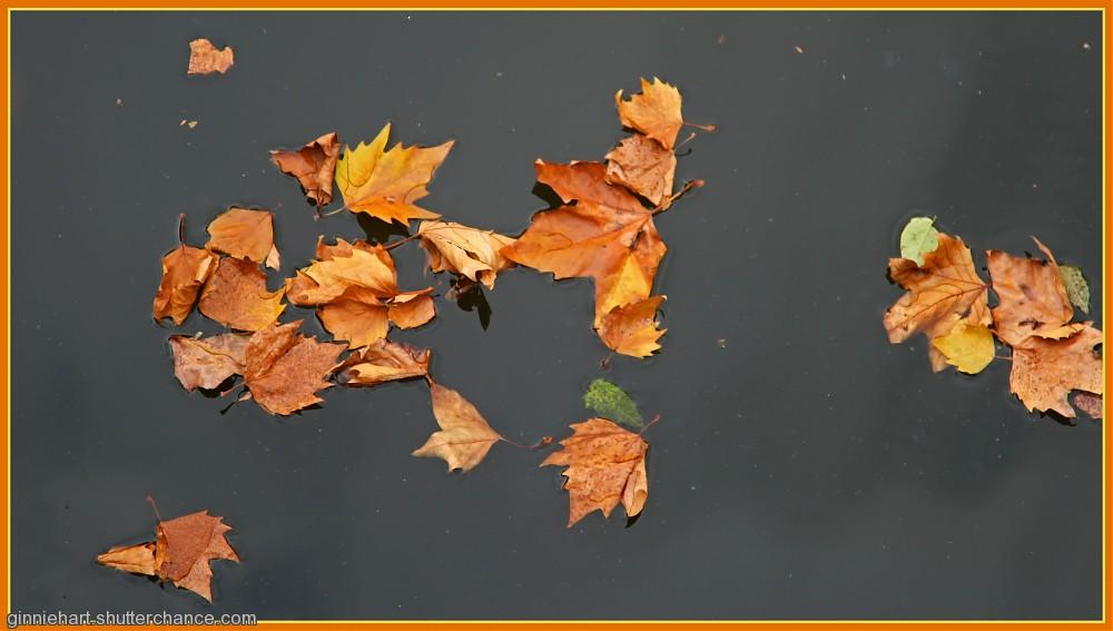 photoblog image Autumn Canal