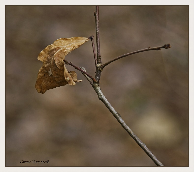 photoblog image Hanging On