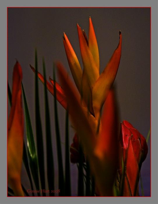 photoblog image Bird of Paradise