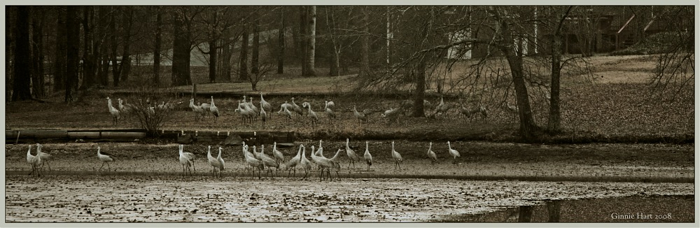 photoblog image Grand Migration