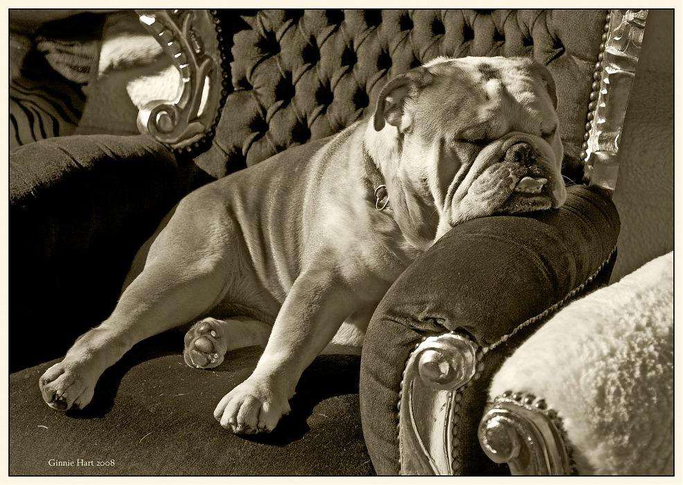photoblog image <s>Dog Almighty</s>  A Dog's Life