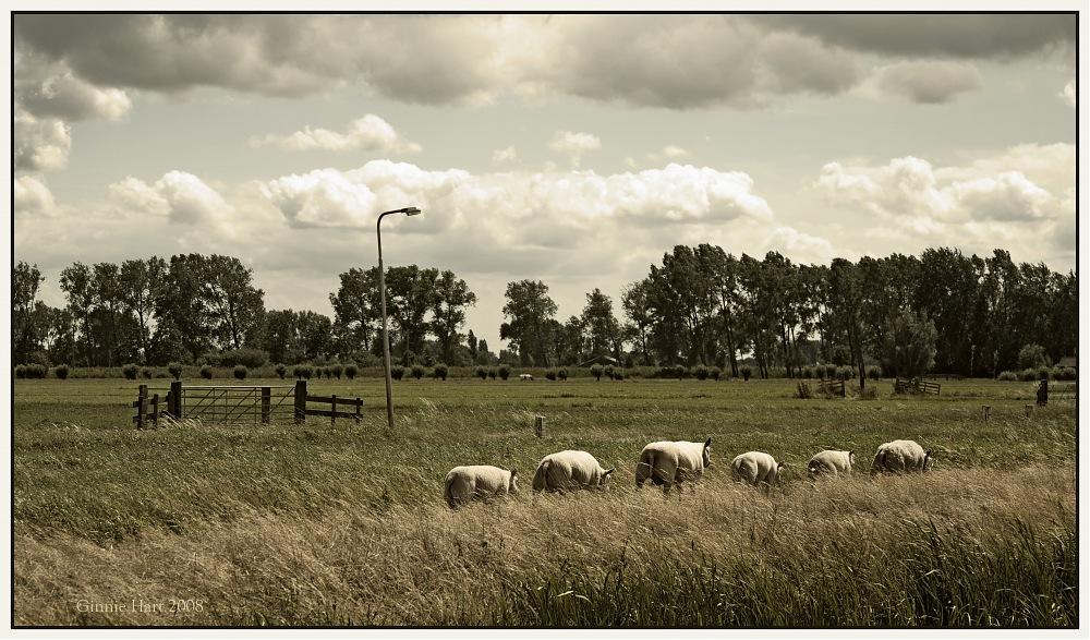 photoblog image All We Like Sheep