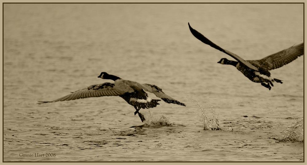 photoblog image Sail Away With Me
