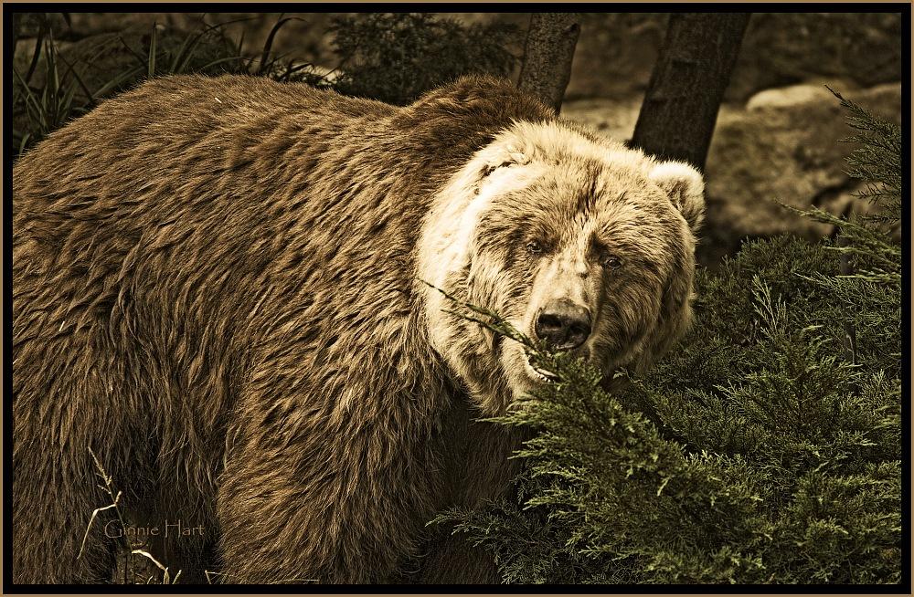 photoblog image Bear Necessities