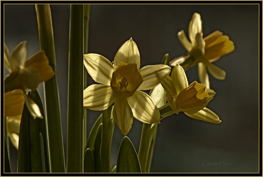 photoblog image It's Spring!