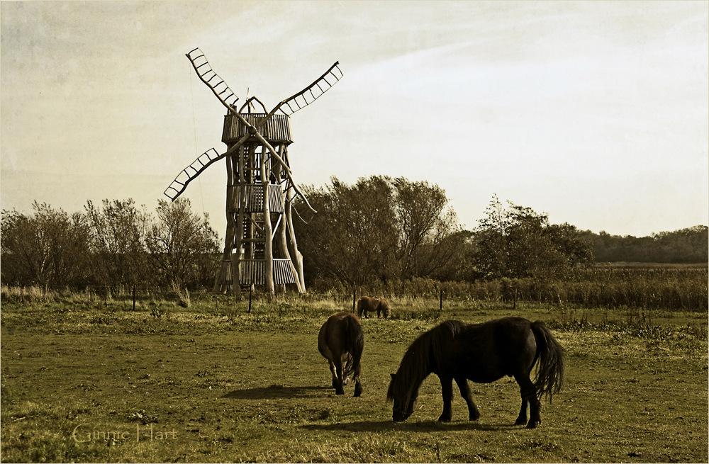 photoblog image Windmills of My Mind