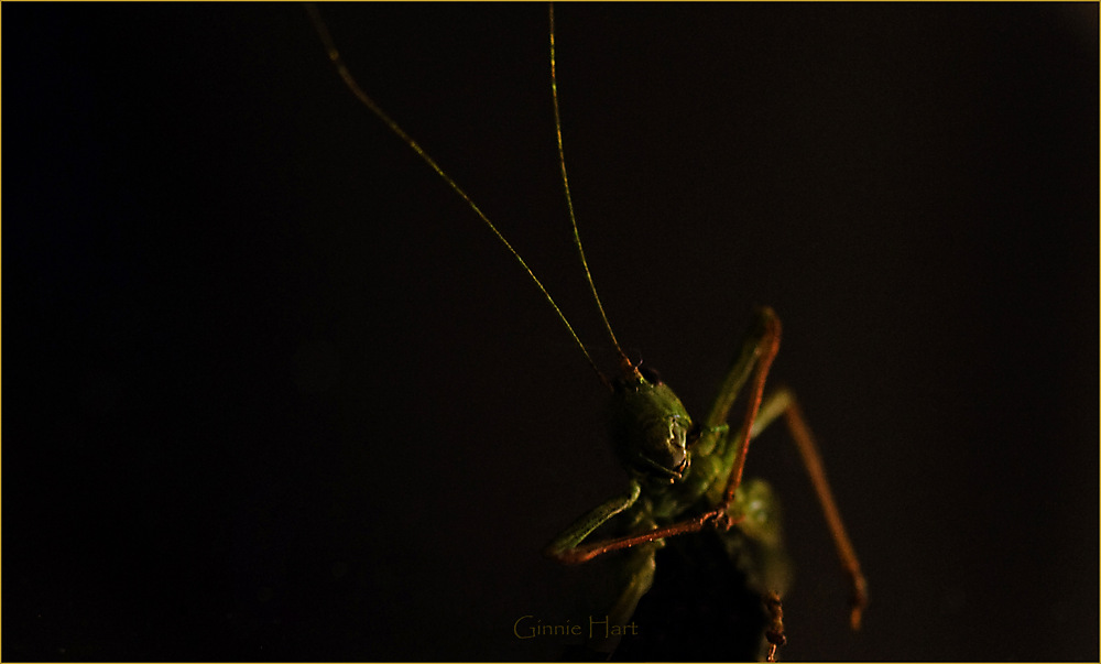 photoblog image Jiminy Cricket