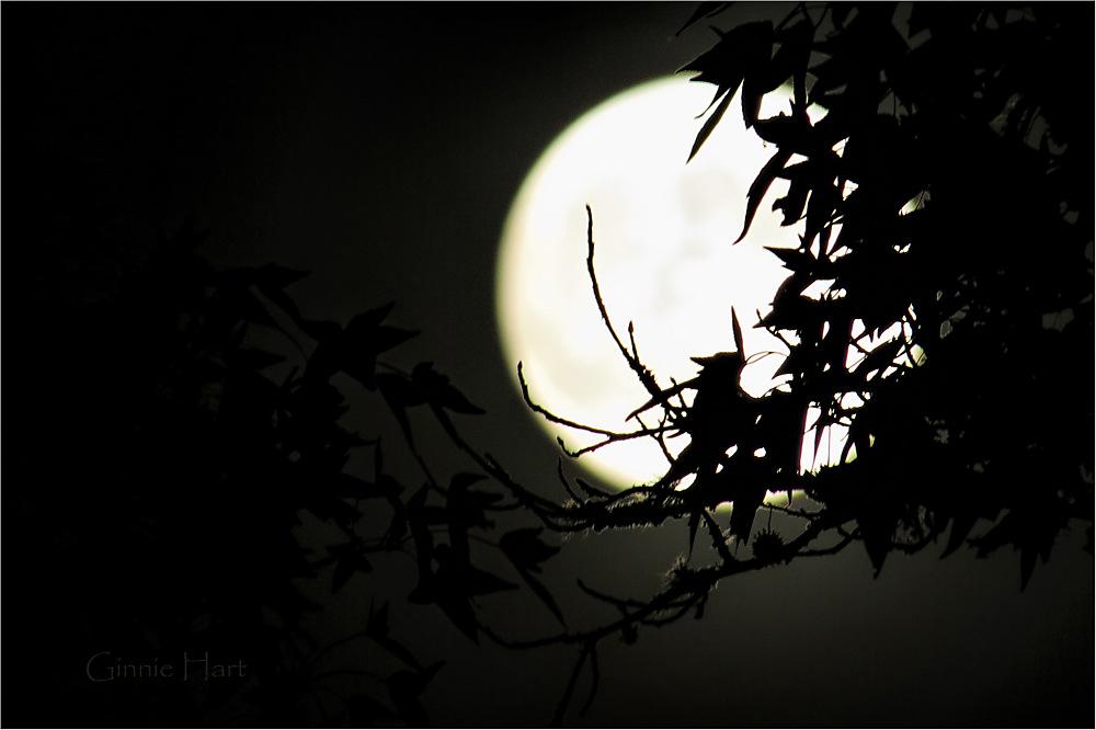 photoblog image Happy All Hallows' Eve